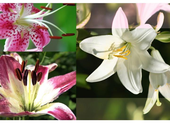 Fotobehang Vlies | Bloemen | Roze, Groen | 254x184cm