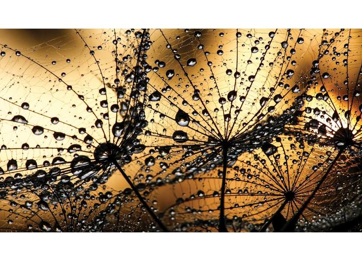 Fotobehang Vlies | Bloemen | Bruin, Goud | 254x184cm