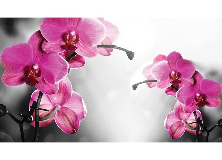 Fotobehang Vlies | Orchideeën, Bloem | Roze | 254x184cm