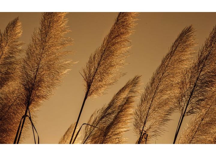 Fotobehang Vlies | Natuur | Bruin | 254x184cm