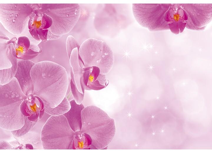 Fotobehang Vlies | Bloemen, Orchidee | Roze, Wit | 254x184cm