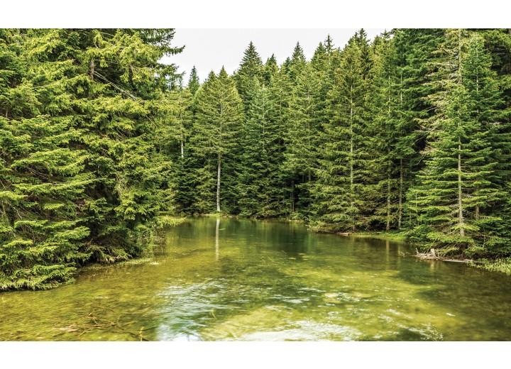Fotobehang Vlies   Bomen   Groen   254x184cm