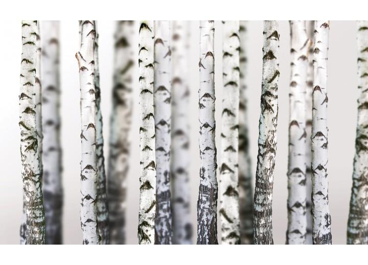 Fotobehang Vlies   Bomen   Grijs, Wit   254x184cm