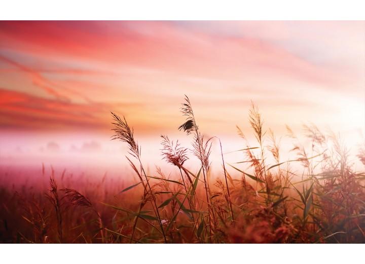 Fotobehang Vlies   Natuur   Roze   254x184cm