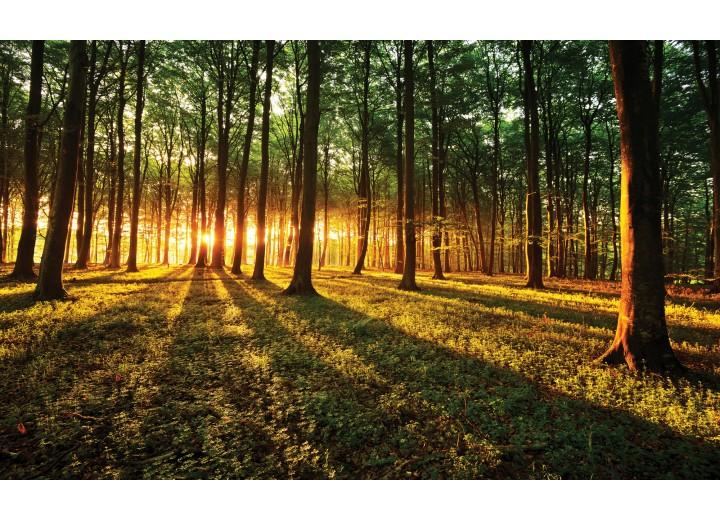 Fotobehang Vlies   Bos, Natuur   Groen, Geel   254x184cm