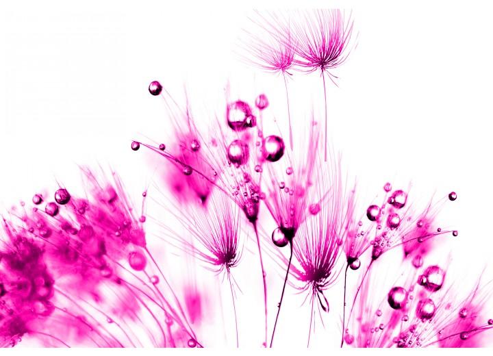 Fotobehang Vlies | Bloemen | Roze, Wit | 254x184cm