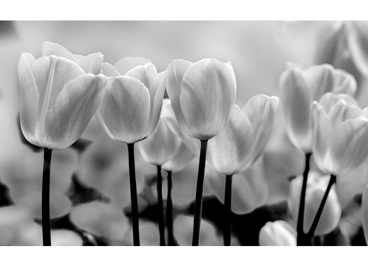 Fotobehang Vlies | Bloemen, Tulpen | Grijs | 254x184cm