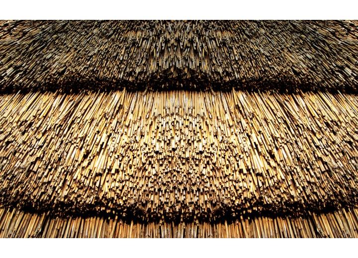 Fotobehang Vlies | Landelijk | Bruin | 254x184cm