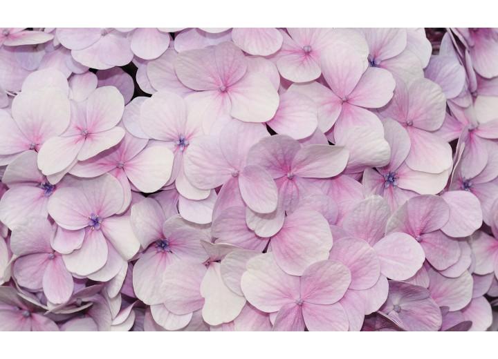 Fotobehang Vlies | Bloemen | Roze | 254x184cm