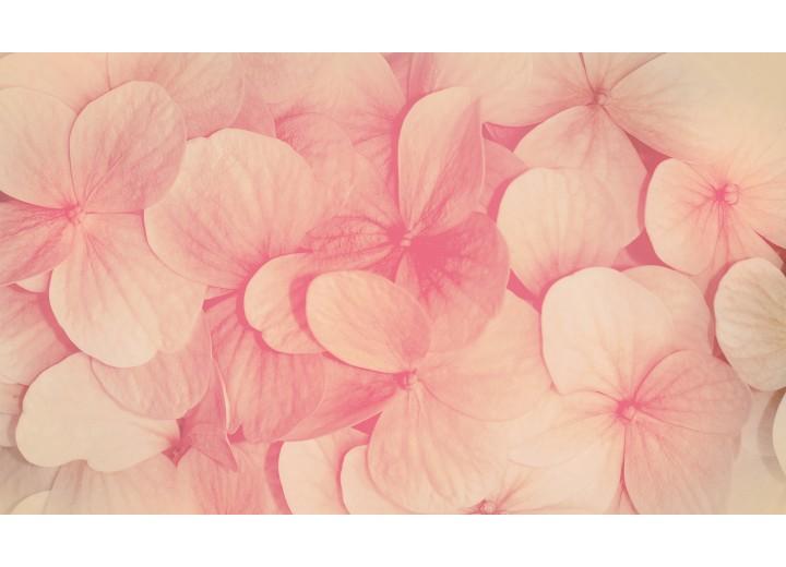 Fotobehang Vlies | Bloemen | Roze, Crème | 254x184cm