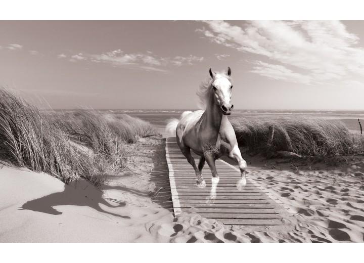 Fotobehang Vlies | Paard, Strand | Grijs | 254x184cm