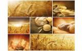 Fotobehang Vlies   Keuken, Landelijk   Bruin   254x184cm