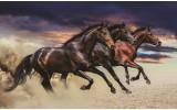 Fotobehang Vlies | Paarden | Bruin | 254x184cm