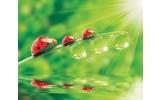 Fotobehang Vlies | Natuur | Rood, Groen | 254x184cm