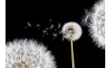 Fotobehang Vlies | Bloemen, Paardenbloem | Wit | 254x184cm