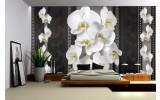 Fotobehang Vlies | Bloemen, Orchideeën | Zwart, Wit | 254x184cm