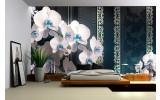 Fotobehang Vlies | Bloemen, Orchideeën | Turquoise | 254x184cm
