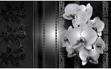 Fotobehang Vlies   Bloemen, Orchidee   Zwart   254x184cm
