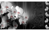 Fotobehang Vlies | Bloemen, Orchidee | Zwart | 254x184cm
