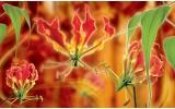 Fotobehang Vlies   Bloemen   Oranje   254x184cm