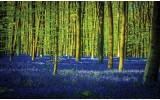 Fotobehang Vlies | Bos | Groen, Blauw | 254x184cm
