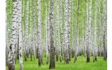 Fotobehang Vlies | Bos | Groen | 254x184cm