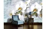Fotobehang Vlies   Orchidee, Bloemen   Wit   254x184cm