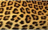 Fotobehang Vlies   Luipaard   Bruin   254x184cm