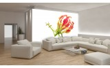 Fotobehang Vlies   Bloemen   Wit, Rood   254x184cm