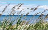 Fotobehang Vlies   Strand, Zee   Blauw   254x184cm
