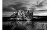 Fotobehang Vlies | Jaguar, Dieren | Zwart | 254x184cm