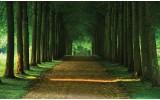 Fotobehang Vlies | Bos, Natuur | Groen | 254x184cm