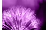 Fotobehang Vlies | Bloemen | Paars, Wit | 254x184cm