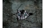 Fotobehang Vlies   3D, Dieren   Grijs   254x184cm