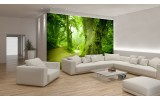 Fotobehang Vlies | Boom | Groen | 254x184cm