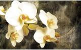 Fotobehang Vlies | Orchidee, Bloemen | Geel | 254x184cm
